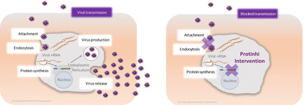 Protinhi's solutioin